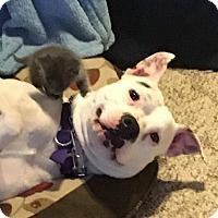 Adopt A Pet :: Theo - Tillamook, OR