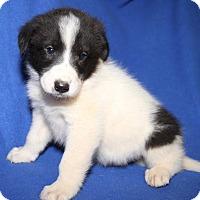 Adopt A Pet :: BM6 - Orland Park, IL