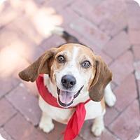 Adopt A Pet :: Willie Nelson - NEEDS FOSTER! - Washington, DC