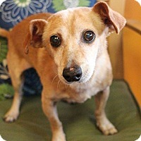 Hound (Unknown Type) Mix Dog for adoption in New Orleans, Louisiana - Jack