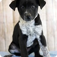 Adopt A Pet :: Raina - Waldorf, MD
