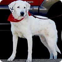 Adopt A Pet :: Annie family dog - Sacramento, CA