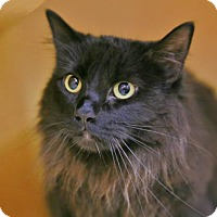 Adopt A Pet :: Thomas - Kettering, OH