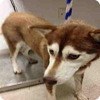 Adopt A Pet :: RUBY - Bakersfield, CA