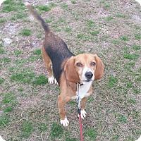 Adopt A Pet :: ELLA - Wilmington, NC