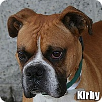 Adopt A Pet :: Kirby - Encino, CA