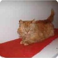 Adopt A Pet :: Tucker - Hamburg, NY