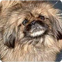 Adopt A Pet :: Scarlett - Mays Landing, NJ