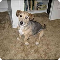 Adopt A Pet :: Carly - Meridian, ID