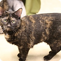 Adopt A Pet :: Tamar - Chicago, IL