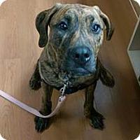Adopt A Pet :: BRONX - Oswego, IL
