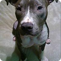 Adopt A Pet :: Tango - Ft. Myers, FL