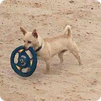 Adopt A Pet :: Po - Golden Valley, AZ