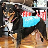 Adopt A Pet :: Thor - Queenstown, MD