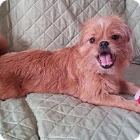 Adopt A Pet :: Pookie - New Oxford, PA