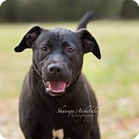 Adopt A Pet :: Jackson - Macon, GA