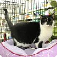 Domestic Shorthair Cat for adoption in Bear, Delaware - Zoe