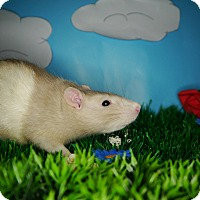 Adopt A Pet :: Joyce - Welland, ON