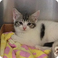 Adopt A Pet :: Breezy - East Brunswick, NJ