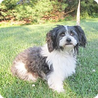 Adopt A Pet :: CARSON ~ AVAILABLE SOON! - WOODSFIELD, OH