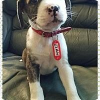 Adopt A Pet :: Elroy - Garden City, MI