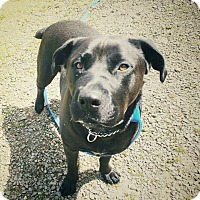 Adopt A Pet :: Betty - Tillamook, OR