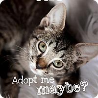 Adopt A Pet :: Rio - Jacksonville, FL