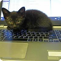 Adopt A Pet :: June Carter Cash - Florence, KY