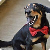 Adopt A Pet :: Hal - McKinney, TX