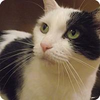 Adopt A Pet :: Cinnamon *Petsmart GB* - Appleton, WI