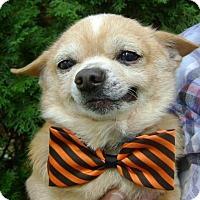 Adopt A Pet :: Papa - Livonia, MI
