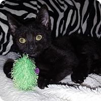 Adopt A Pet :: Trista - Gainesville, VA