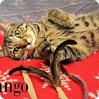 Adopt A Pet :: Mango - Melbourne, KY
