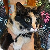 Adopt A Pet :: Kaly - Wildomar, CA