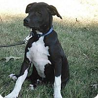 Adopt A Pet :: Banjo - Adamsville, TN