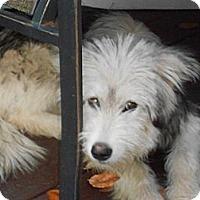 Adopt A Pet :: Kira & KyLee-bonded - Raleigh, NC