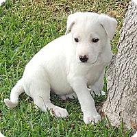 Adopt A Pet :: Conn - La Habra Heights, CA