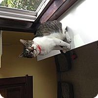 Adopt A Pet :: Highlander - Lancaster, MA