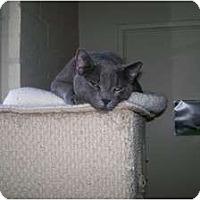 Adopt A Pet :: Chet - Scottsdale, AZ