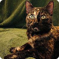 Adopt A Pet :: Burst!  (aka Cora) - Florence, KY