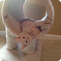 Adopt A Pet :: Scout - Waxhaw, NC