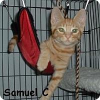 Adopt A Pet :: Samuel C - Sacramento, CA
