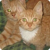 Adopt A Pet :: Seamus & Niko - bloomfield, NJ