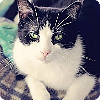 Adopt A Pet :: Jinx - Markham, ON