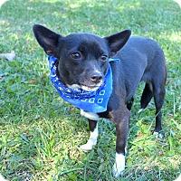 Adopt A Pet :: Pocahontas - Mocksville, NC