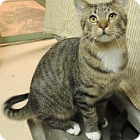 Adopt A Pet :: Doc - Westville, IN