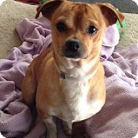 Adopt A Pet :: Bon Bon - San Francisco, CA