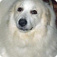 Adopt A Pet :: Skylar in MO - Beacon, NY