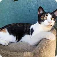 Adopt A Pet :: Tiki - Lathrop, CA