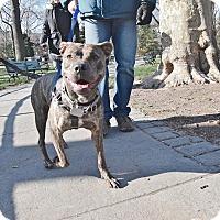 Adopt A Pet :: Mary Tyler Moore - Jersey City, NJ